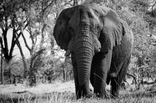 9945 Rang 8 TRO 26Pt Botswana Jenni Peter