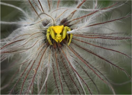 Gelbes Monster