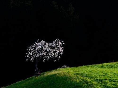 Bestes FB 4937 26Pt Landschaft Abendlicht - Brönnimann Markus