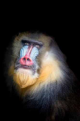 Bestes Fauna Flora4760 FB 25Pt Portraits en couleurs Ayer Jean-Marc